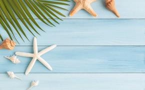 Picture beach, summer, star, shell, summer, beach, starfish, seashells