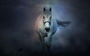 Picture fog, horse, horse