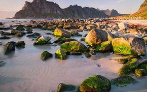 Picture sand, sea, the sky, the sun, stones, rocks, dawn, coast, moss, Norway, Bay, The Lofoten …