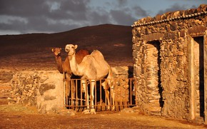 Picture the sky, light, nature, hills, desert, the fence, heat, pair, structure, two, camels, corral, stone, …