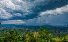 Picture forest, clouds, clouds, rain, forest, rain, clouds