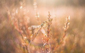 Picture macro, light, glare, dawn, glade, plant, dragonfly, morning, stem, insect, bokeh
