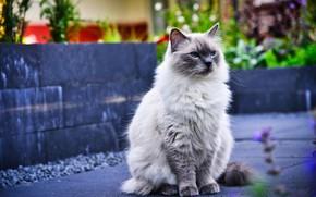 Picture cat, cat, treatment, sitting