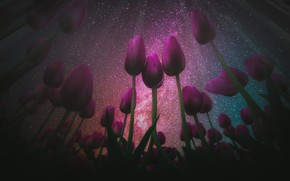 Picture field, the sky, stars, light, night, the dark background, rendering, spring, The milky way, tulips, …