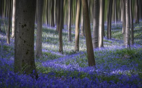 Picture forest, flowers, spring