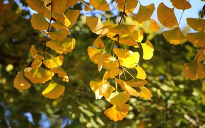 Picture autumn, leaves, light, trees, branches, foliage, yellow, bokeh, autumn leaves