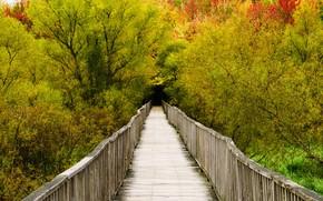 Picture autumn, Canada, Quebec