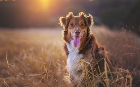 Picture each, dog, morning