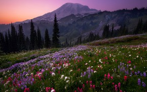 Picture forest, the sky, flowers, mountains, the evening, hill, Doug Shearer