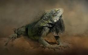 Picture pose, treatment, iguana, reptile, photoart