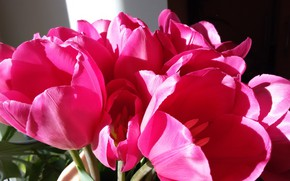 Picture spring, Tulips, Lula raspberry :)