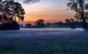 Picture grass, flowers, fog, spring, morning