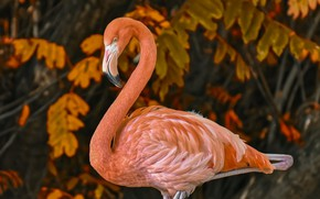 Picture leaves, branches, nature, bird, Flamingo