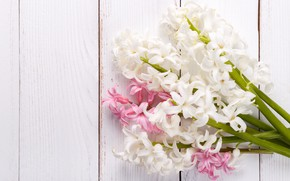 Picture flowers, pink, bouquet, white, hyacinths, Olena Rudo