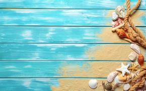Picture sand, beach, shell, beach, wood, sand, marine, still life, starfish, seashells