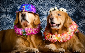 Picture dogs, hat, wreaths
