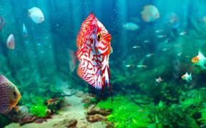 Picture fish, aquarium, Soren Meding, Realistic Aquarium