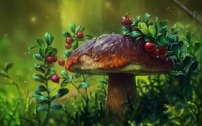 Picture forest, berries, mushroom, cranberries