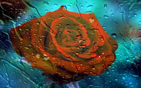 Picture flower, glass, drops, background, rain
