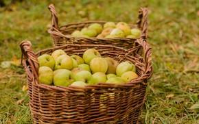 Picture autumn, nature, apples, harvest, basket