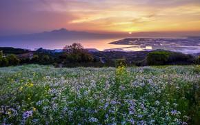 Picture grass, landscape, sunset, flowers, mountains, the city, river, Japan, Kumamoto, Shirakawa