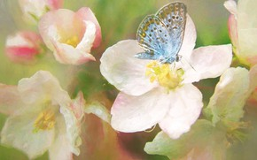 Picture macro, flowers, butterfly, spring, art, painting, flowering, blue, strokes, photoart