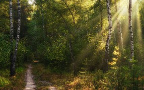 Picture greens, autumn, forest, summer, rays, light, trees, branches, Park, thickets, trunks, foliage, track, birch, alley, ...
