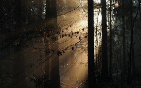 Picture autumn, forest, morning