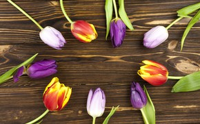 Picture flowers, colorful, tulips, flowers, beautiful, tulips, spring, purple, multicolored