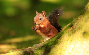 Picture summer, light, green, background, protein, muzzle, animal, red, wildlife, squirrel, rodent, meal