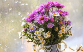 Picture flowers, chamomile, bouquet, pink, white, different, bokeh, asters, Daisy