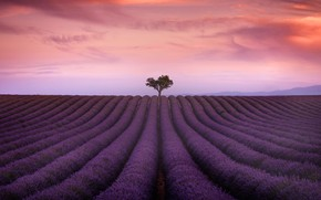 Picture field, summer, the sky, clouds, flowers, nature, tree, France, the evening, horizon, haze, a lot, …