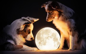 Picture dogs, look, light, night, pose, interest, the dark background, the moon, two, lamp, dog, lamp, …