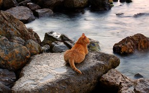 Picture sea, cat, cat, landscape, stones, shore, red, lies, resort, tans, cheto is not awash ))