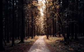 Picture road, forest, nature, Park