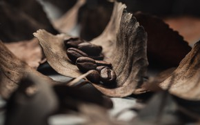 Picture Macro, Leaves, Grain, Coffee