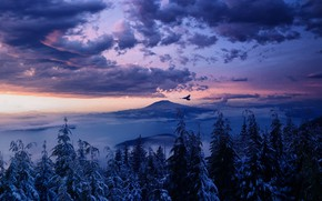 Picture winter, forest, the sky, clouds, trees, flight, landscape, sunset, mountains, clouds, nature, fog, rendering, bird, …