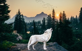 Picture forest, white, rendering, wolf, howl, howling, polar