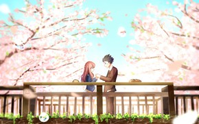 Picture trees, Park, romance, spring, Sakura, pair, flowering, You no Katachi, Form voice
