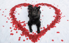 Picture each, heart, dog