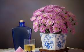 Picture flowers, glass, style, background, bottle, pink, still life, chrysanthemum, glass, pot, swipe