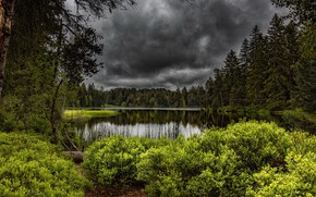 Picture forest, summer, lake