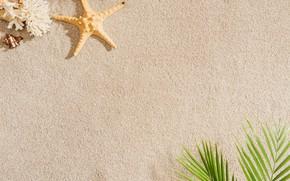 Picture sand, beach, summer, Palma, shell, summer, beach, sea, sand, starfish, palm, seashells
