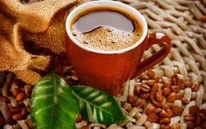 Picture leaves, close-up, coffee, Cup, grain, bokeh