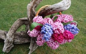 Picture bouquet, composition, hyacinths