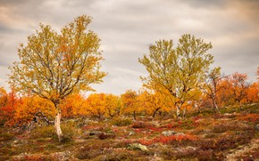 Picture field, autumn, trees