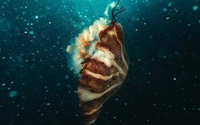 Picture underwater, ocean, jellyfish, bubles
