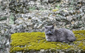 Picture cat, background, moss