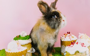 Picture look, rabbit, Easter, ears