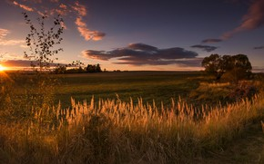 Picture field, the sky, grass, the sun, clouds, light, trees, landscape, sunset, nature, dawn, the evening, …